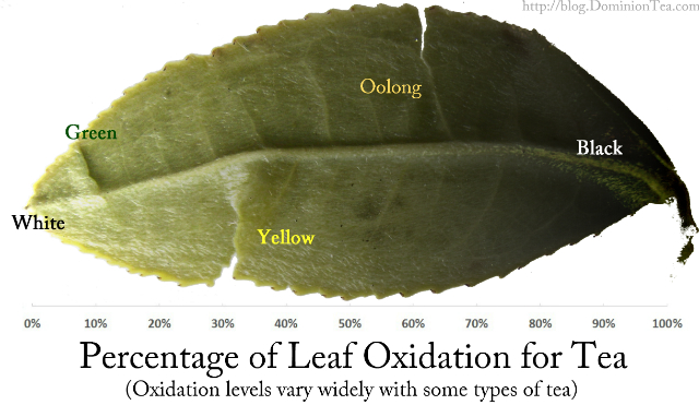 Graphic scale of types of tea by oxidation.
