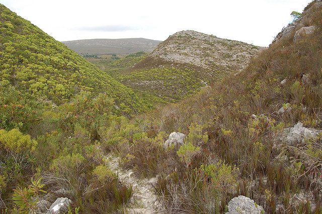 Cederberg Mountain Region of South Africa